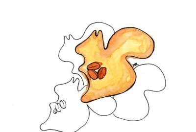 jak zrobić kruche ciasteczka w kształcie wiewiórek z orzechami